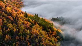 Brouillard et forêt Photo stock