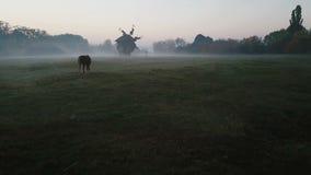 Brouillard et lever de soleil Cheval et moulin dans le matin brumeux sur le champ l'atmosphère mystique dépressive triste calme C banque de vidéos