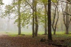 Brouillard froid dans la forêt d'automne Images stock