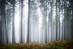 Brouillard mystérieux dans la forêt verte Images libres de droits