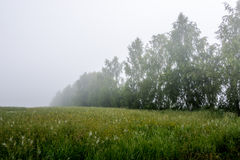 Brouillard mystique Photos stock