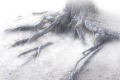Brouillard mystique dans la forêt Photo stock