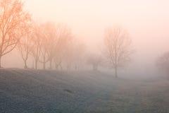 Brouillard orange photos libres de droits
