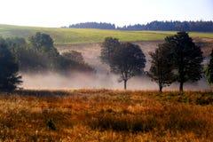 Brouillard parmi les arbres photographie stock libre de droits