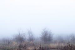 Brouillard pendant le matin Photos libres de droits