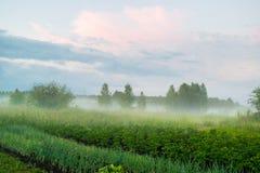 Brouillard sous le paysage rural Russie de pré Photo stock