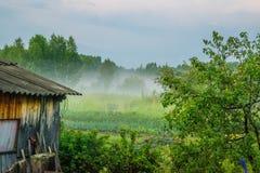 Brouillard sous le paysage rural Russie de pré images libres de droits