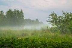 Brouillard sous le paysage rural Russie de pré image libre de droits
