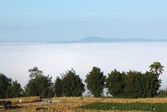 Brouillard sur l'arbre Photo stock