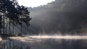 Brouillard sur le lac de matin de camping de forêt