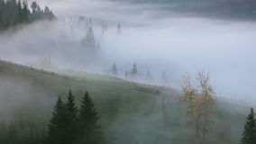 Brouillard sur le pâturage de montagne banque de vidéos