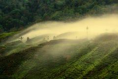 Brouillard vers le bas Photo libre de droits