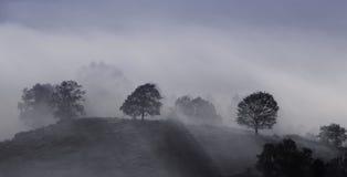Brouillards à l'aube. Images stock