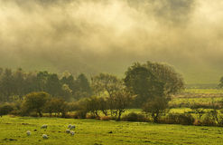 Brouillards de matin, automne Photos libres de droits