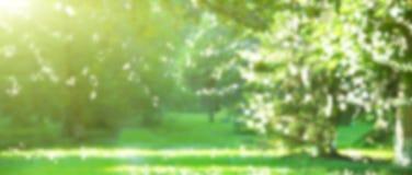 Brouillez le fond avec la forêt verte avec le bokeh et la lumière du soleil photo stock