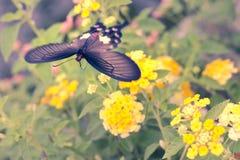 Brouillez le mouvement du papillon rouge volant au-dessus des fleurs de haie Photographie stock libre de droits