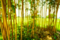 Brouillez le parc avec la saison de fond, de nature, de jardin, de ressort et d'?t? de lumi?re de bokeh photo libre de droits