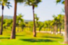 Brouillez le parc de vert de bokeh de nature par la plage et les arbres de noix de coco tropicaux photographie stock libre de droits