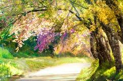 Brouillez le passage couvert de paysage en beau parc pour le fond Image libre de droits