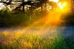 Brouillez le paysage rural de fond avec les faisceaux du soleil sur un pré photos stock