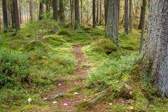 Broussaille de mousse dans la forêt conifére image stock