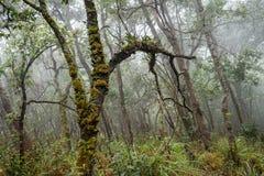 Broussaille humide et brumeuse avec les usines sauvages et la forêt de mousses, foncée et menaçante images stock
