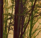 Broussailles vertes abstraites photo libre de droits