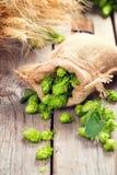 brouwerij Hoopkegels en van tarweoren close-up De ingrediënten van de bierproductie stock foto's