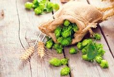 brouwerij Hoopkegels en van tarweoren close-up De ingrediënten van de bierproductie op houten gebarsten lijst stock foto