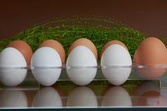 Brovn και άσπρα αυγά Στοκ Εικόνες