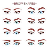 Brow Shapes. Infographic Eps  10 Royalty Free Stock Photos