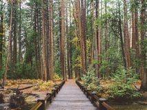 Brow Wooden Bridges Beside Green Plant Royalty Free Stock Photography