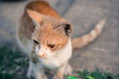 Browen и котенок Стоковые Изображения RF