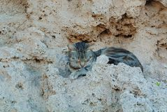 A brown abandoned cat sleeping on the stones rocks in the street. Of resort town royalty free stock photography