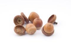Brown acorns Royalty Free Stock Photo