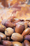 Brown acorns with autumn leaves in the background Royalty Free Stock Photo