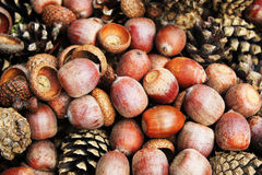 Brown acorns and cones, close up Stock Image