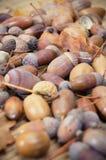 Brown acorns z jesień liśćmi obrazy stock
