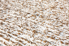 Brown acres with snow in winter in beautiful light and structure Royalty Free Stock Photos
