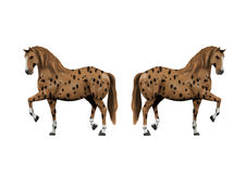 Brown adult horse with black dots Royalty Free Stock Images