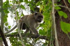 Brown-Affe, der auf Baum anhaftet Lizenzfreies Stockbild