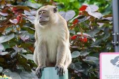Brown-Affe, der in einem Park geht und spielt Stockfoto