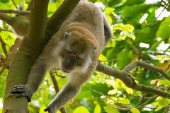 Brown-Affe, der in einen Park geht Lizenzfreies Stockfoto