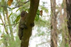 Brown-Affe, der in einen Park geht Stockfotos
