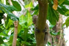 Brown-Affe, der in einen Park geht Stockbilder