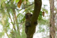 Brown-Affe, der in einen Park geht Lizenzfreie Stockfotos