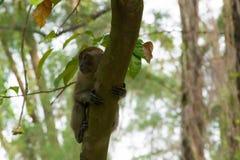 Brown-Affe, der in einen Park geht Lizenzfreie Stockbilder