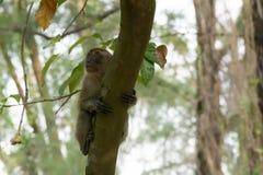 Brown-Affe, der in einen Park geht Stockbild