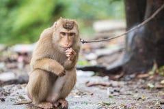 Brown-Affe, der im Park von Thailand sitzt Lizenzfreie Stockfotos