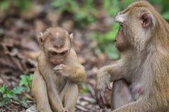 Brown-Affe, der im Park von Thailand sitzt Lizenzfreies Stockfoto